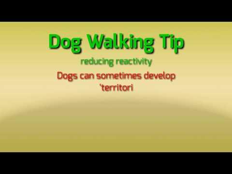 Dog Walking Tip 01