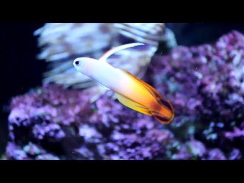 12 Gallon Mr. Aqua Reef Tank - Close Ups