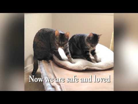 Cats kneading with music (our happy rescue story!)