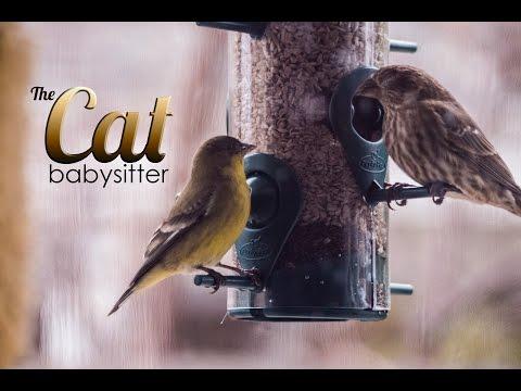 Cat TV - Bird feeder in High Definition