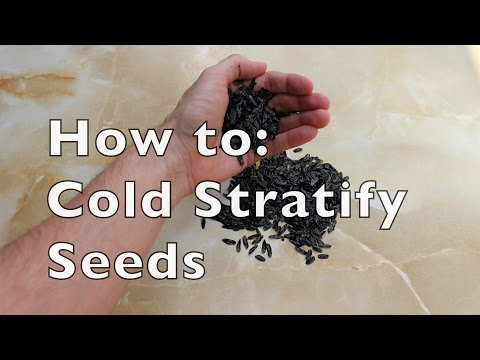 Germination Tips: Cold Stratification of Seeds