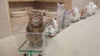 귀여운 고양이 기차가 출발합니다!