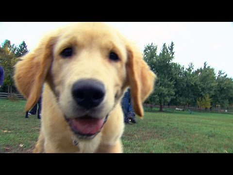 Puppy Love: How to choose the right dog for your family