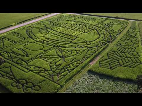 Treinen Farm Corn Maze -  A Trilobite!