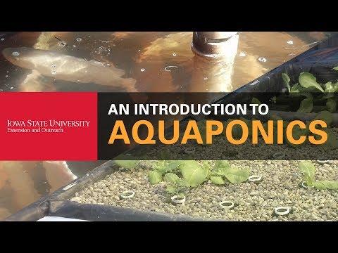 How Do You Get Into Aquaponics