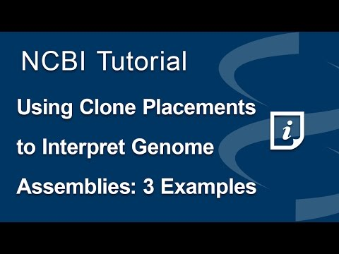 Using Clone Placements to Interpret Genome Assemblies: 3 Examples
