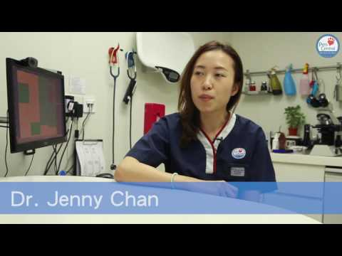 Ask the Vet:  Cleaning My  Indoor Cats - Pets Central
