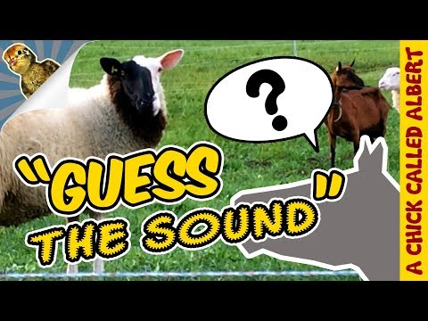 Can a bird become a dog? - Guess the Sound #1