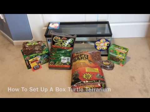 How To Set Up A Box Turtle Terrarium