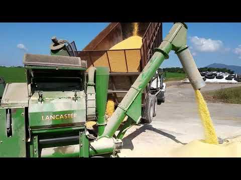 Grinding high moisture corn.