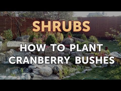How to Plant Cranberry Bushes