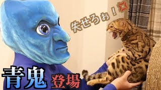 Download ガチトラウマ!!猫たちの前に″リアル青鬼″が現れた結果・・・ Video