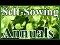 Toward a Do-Nothing Gardening, pt. 3: Self-Sowing Annuals (Lazy Gardening)