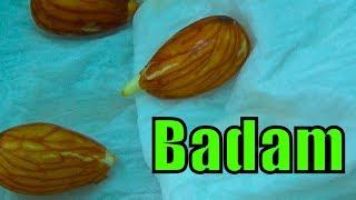 740# Badam Ka Plant Badam Se Bnao  | Almond From Seeds | Complete Video
