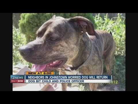 Neighbors in Johnstown worried about aggressive dog