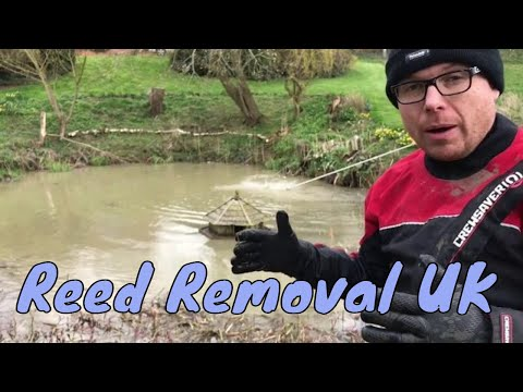Reed Removal UK | How to remove Bulrush or Reed mace