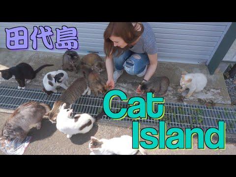 A Day on Japan's CAT ISLAND: TASHIROJIMA