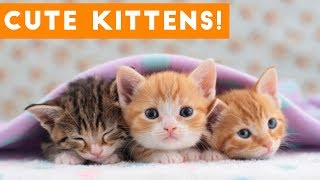 Cutest Kitten Video Compilation of 2017   Funny Pet Videos