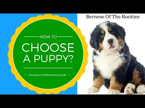 HOW TO CHOOSE A PUPPY?