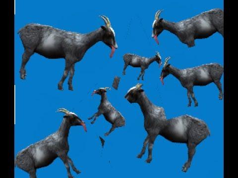 GoatZ  Showing all goats