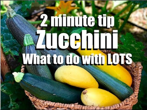 Zucchini - 2 Quick, Simple Things to Do With It:  Oven Roasting and Freezing // CaliKim 2 Minute Tip