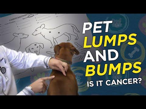 Is it Cancer? Pet Lumps & Bumps  - VetVid Episode 023