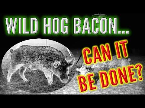How to make Wild Hog BACON!