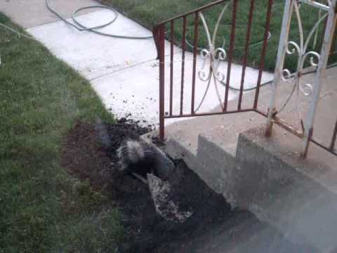 How to Keep a Skunk Away