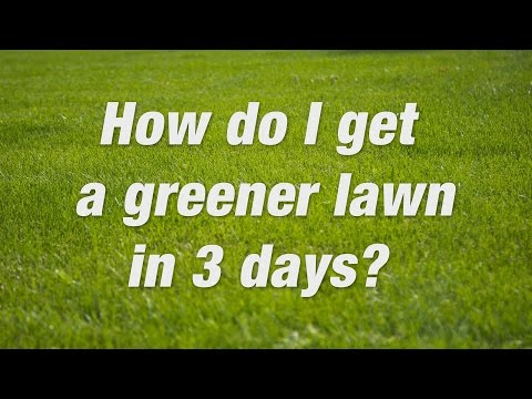 How to Get a Green Lawn Fast | Scotts Miracle-Gro Canada