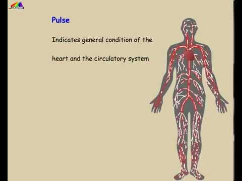 What does our pulse rate indicate?