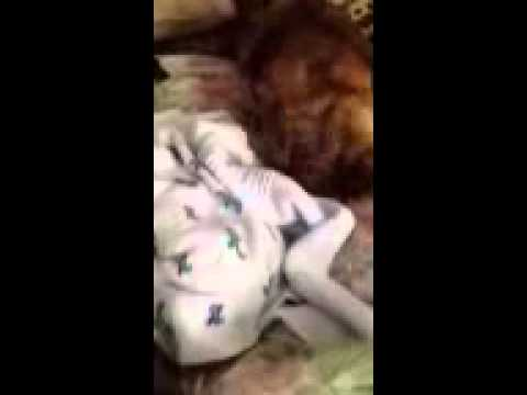 Dog Takes Care of Newborn Baby - Motherly Instincts