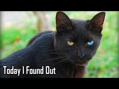 Why Black Cats Are Considered Bad Luck