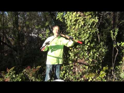 Steve Miesen shows how to remove and kill English Ivy on trees