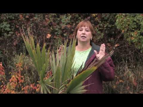 Tree & Plant Care : How to Grow a Palm Tree