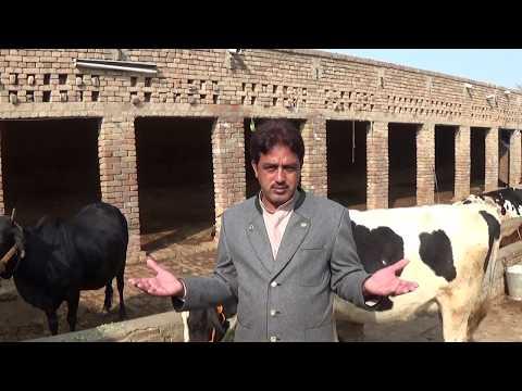 how to start low budget dairy farm