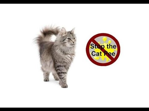 How To Stop Your Cat Spraying Urine | Stop Your Cat Peeing In The House