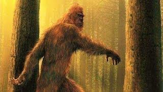 Житель закарпатской деревни во дворе своего дома увидел огромное лохматое существо. Существо замерло и несколько секунд смотрело на пенсионера, а потом резко развернулось и побежало прочь на задних лапах. Село Апша находится на границе Украины и Румынии. Теперь на поиски снежного человека отправилось много энтузиастов. В близлежащих лесах и раньше находили непонятные следы, тушки животных и поломанные ветки деревьев, но увидеть йети никому из местных жителей ещё не удавалось. У разных народов снежного человека называют по разному: бигфут, сасквоч, йети, леший. Согласно приданию, существо похожее на йети обитало в карпатских горах еще в средние века.