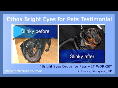 Dog Cataract Treatment Eye Drops - Dog Cataracts Review Video