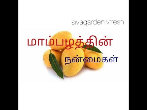 Mango Fruit Benefits in Tamil