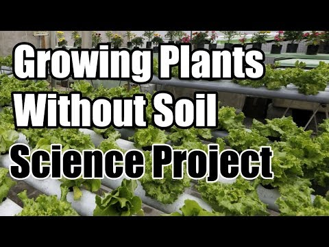 Growing Plants Without Soil Science Project
