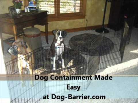 dog gates indoor