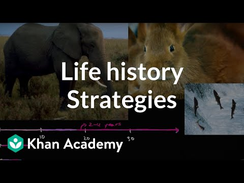 Organism life history and fecundity  | Ecology | Khan Academy