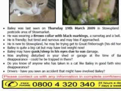Free- missing/stolen pet poster campaigns- as part of your pet insurance