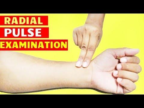 PULSE EXAMINATION I HOW TO CHECK PULSE I RADIAL PULSE examination I PULSE RATE