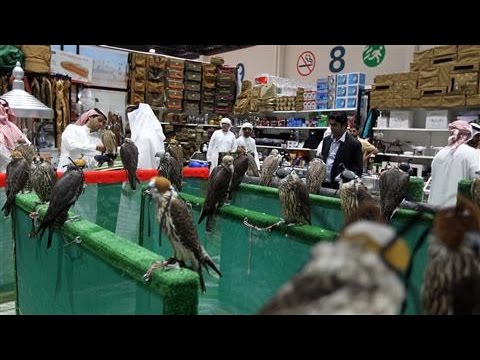 In Abu Dhabi, a Falcon Beauty Contest