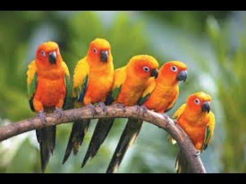 Cheap Outdoor Bird Aviary Plans