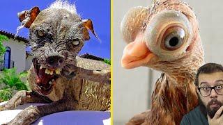 Você nunca viu isso! 5 animais estranhos que parecem de mentira