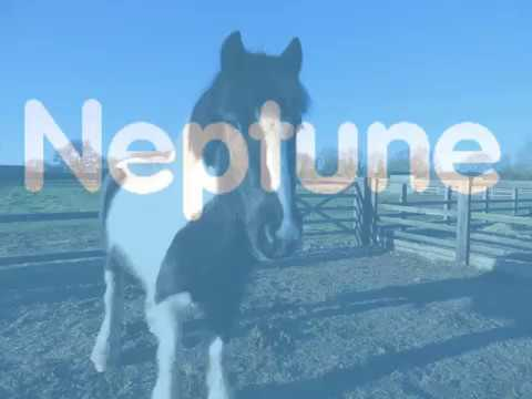 Blue Cross Neptune is looking for a home as a project pony