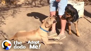 Stray Dog Refuses To Be Caught Until His Friend Shows Up The Dodo Adopt Me
