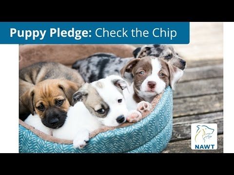 NAWT's Puppy Pledge: Check the Chip